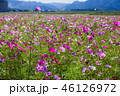 お花 フラワー 咲く花の写真 46126972