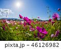 お花 フラワー 咲く花の写真 46126982