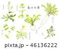 春の七草 水彩画 46136222