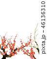 紅梅と白梅イラスト素材 46136310