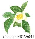 お茶の花  茶 46139641