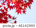 紅葉 青空 秋の写真 46142993