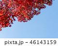 紅葉 青空 秋の写真 46143159