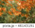 紅葉 もみじ 秋の写真 46143191