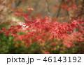 紅葉 もみじ 秋の写真 46143192