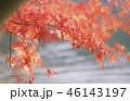 紅葉 もみじ 秋の写真 46143197