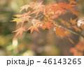 紅葉 もみじ 秋の写真 46143265