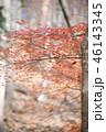紅葉 もみじ 秋の写真 46143345