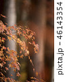 紅葉 もみじ 秋の写真 46143354