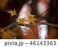 紅葉 もみじ 秋の写真 46143363