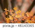 紅葉 もみじ 秋の写真 46143365