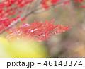 紅葉 もみじ 秋の写真 46143374