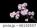 桜 イメージ 46150507