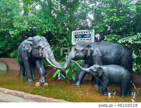シンガポール ナイトサファリ 象の像 Singapore Night Safari Elephant 46150529