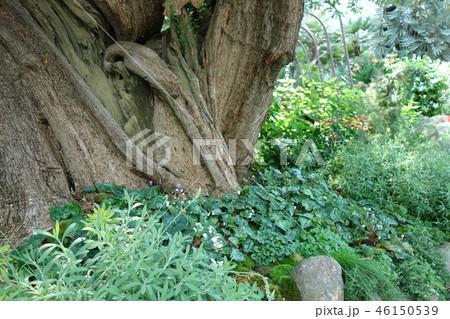 緑の世界 木の幹 植物 Tree Green Gardening 46150539