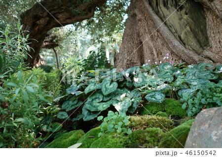 緑の世界 木の幹 植物  Tree Green Gardening 46150542