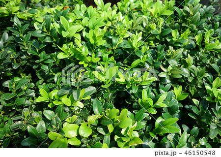 ガーデニング 植物 グリーン Green Leaf Gardening 46150548