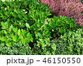 植物 緑 ピンクの花 Green leaf and Pink Flower 46150550