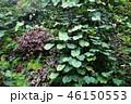 緑の壁 葉っぱ ガーデニング Green leaf Gardening 46150553