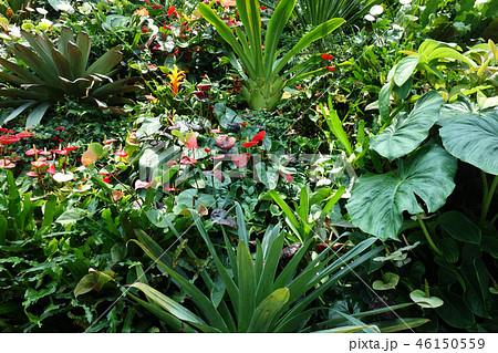 緑の葉 ガーデニング Green leaf Gardening 46150559