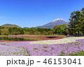 本栖湖リゾート 富士山 芝桜の写真 46153041