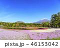 本栖湖リゾート 富士山 芝桜の写真 46153042