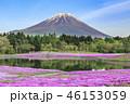 本栖湖リゾート 富士山 芝桜の写真 46153059