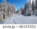 ウィンター ウインター 冬の写真 46153301