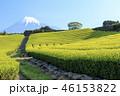 茶畑 新緑 富士山の写真 46153822