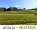 茶畑 新緑 富士山の写真 46153825