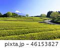 茶畑 新緑 富士山の写真 46153827
