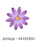 フラワー 花 ヒナギクのイラスト 46162691