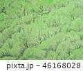 新緑 46168028