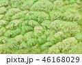 新緑 46168029