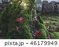 紅葉 葉 楓の写真 46179949