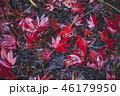 紅葉 葉 楓の写真 46179950