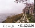 花 さくら 桜の写真 46182889