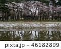 景色 風景 花の写真 46182899