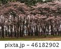 景色 風景 花の写真 46182902