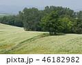 景色 風景 農園の写真 46182982