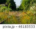 景色 風景 花の写真 46183533