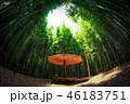 竹 こしかけ ベンチの写真 46183751