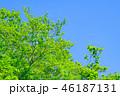 新緑 若葉 木の写真 46187131