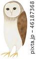かわいい 白バック 鳥のイラスト 46187368