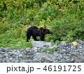 ヒグマ 知床 熊の写真 46191725