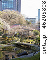 小石川後楽園 日本庭園 春の写真 46205808