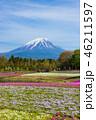 富士山 芝桜 花の写真 46211597