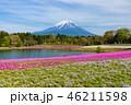 富士山 芝桜 花の写真 46211598