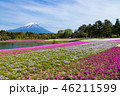 富士山 芝桜 花の写真 46211599