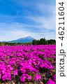 富士山 芝桜 花の写真 46211604